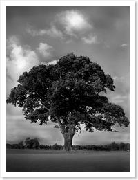 the tree at dundas