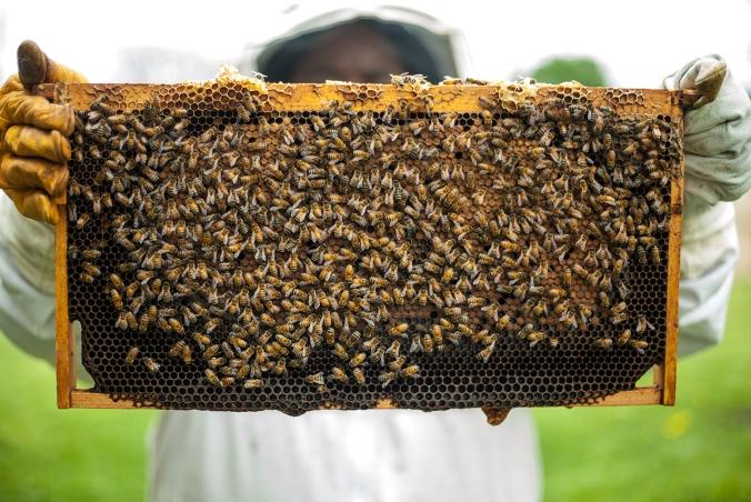 urban-beekeeping.jpg